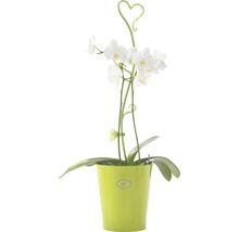 Tige à orchidées Soendgen H 55 cm vert-thumb-1
