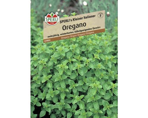 Origan ''Petit italien'' Sperli semence de fines herbes-0