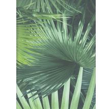 Papier peint intissé 524901 Crispy Paper feuilles de palmier, vert-thumb-0