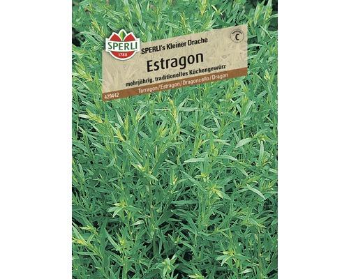 Estragon ''Petit dragon'' Sperli semence de fines herbes-0