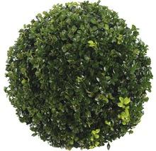 Buchsbaum-Kugel FloraSelf Buxus sempervirens H 25-35 cm Co 5 L-thumb-2