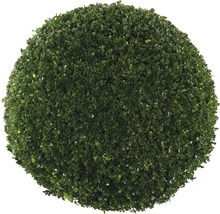 Buis boule FloraSelf Buxus sempervirens H60-70cm pot de Ø42cm-thumb-1
