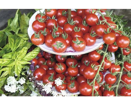 Tomate ''Philovita'' FloraSelf Lycopersicon esculentum ''Philovita'' pot Ø 10,5 cm