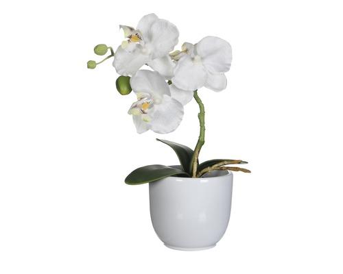 Fleur artificielle Orchidée H 26 cm blanc