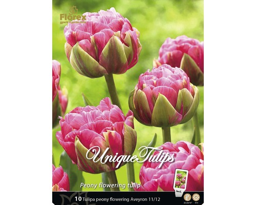 Bulbes de tulipe Aveyron rose, 10 pièces