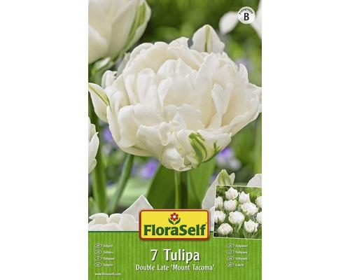 Bulbes FloraSelf tulipe Double La te ''Mount Tacoma'' blanc 7pces