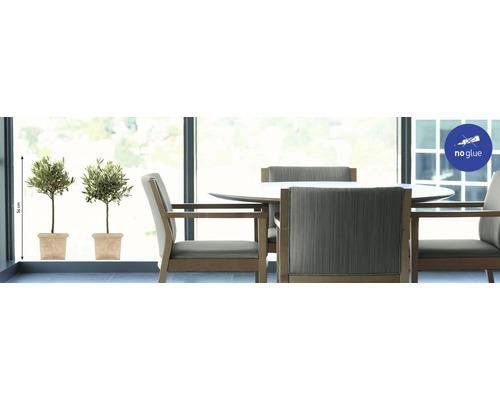Autocollant pour fenêtre Olive Trees 49x69.5cm